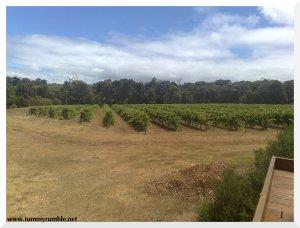 vineyardstate