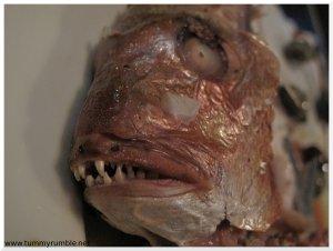 snapper teeth